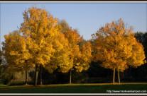 Parkhout